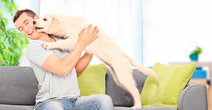 tener-perro-mas-activo-diabetrics